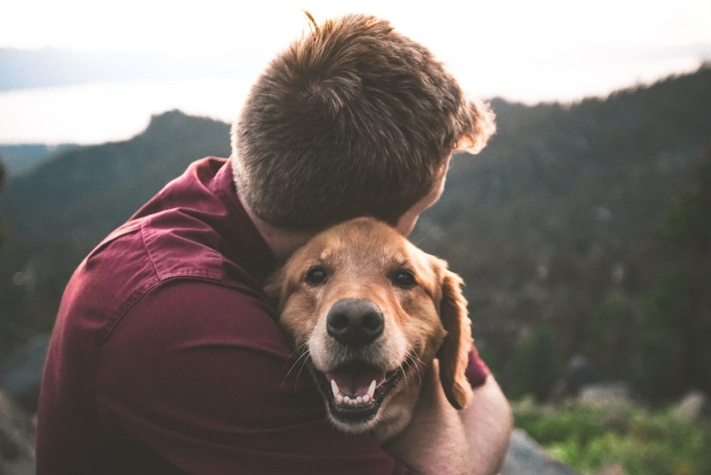Image of taking care of your pets planning for pets planning for loved ones pets and the pandemic pet trust estate planning  on estate management asset protection law site